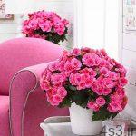 دوست داری در خانه گل داشته باشی؟ سایت 4s3.ir