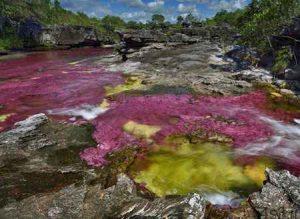 رودخانه 5 رنگ در کلمبیا + تصاویر سایت 4s3.ir
