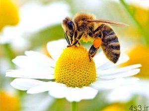 زندگی زنبور عسل سایت 4s3.ir