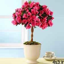 زیباترین گل های آپارتمانی تزیینی سایت 4s3.ir