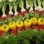 سبزیجات را چگونه بپزیم که خواص آن حفط شود؟ سایت 4s3.ir