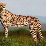سریعترین جانوران روی زمین را بشناسید! سایت 4s3.ir