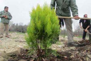 شناخت درخت و آموزش درختکاری سایت 4s3.ir