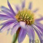 شناخت گیاهان فصلی، این گلهای تابستانی سایت 4s3.ir