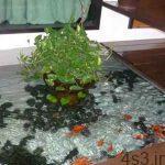 طراحی حوض و نحوه نگهداری از ماهی ها سایت 4s3.ir