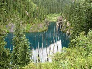 عجیب ترین دریاچه دنیا با درختانی وارونه سایت 4s3.ir