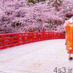 فصل شکوفه های گیلاس در ژاپن (+عکس) سایت 4s3.ir