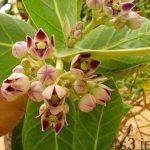 نحوه پرورش و کاشت درختچه یاسمن زمستانی(+عکس) سایت 4s3.ir