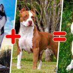 15 نوع سگ از نژادهای ترکیبی سایت 4s3.ir