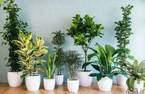 نکاتی برای نگهداری از گیاهان آپارتمانی سایت 4s3.ir