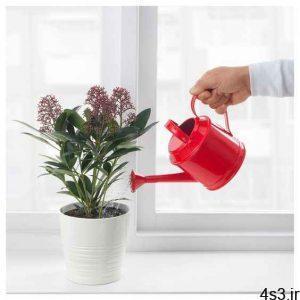 نکاتی که بهتر است درباره آبیاری گیاهان آپارتمانی بدانید سایت 4s3.ir