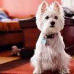 نگهداری از حیوانات خانگی در آپارتمان سایت 4s3.ir