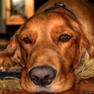 چرا نگهداری از حیواناتِ خانگی اساساً غیراخلاقی است؟ سایت 4s3.ir