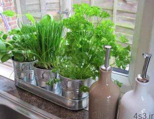 کاشت گیاهانی برای آشپزخانه سایت 4s3.ir
