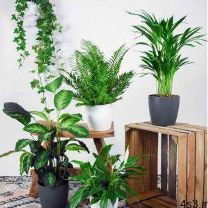 ۴ گیاه آپارتمانی که تصفیهکننده هوا هستند سایت 4s3.ir