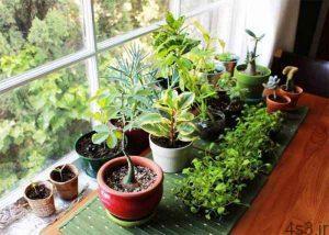 گیاهانی که انرژی مثبت را به خانه تان می آورند سایت 4s3.ir