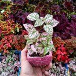 گیاهانی که به خانه شما زیبایی میدهند سایت 4s3.ir