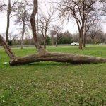 تصاویری از درختان جالب و غیرعادی در آمریکا سایت 4s3.ir
