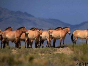 آیا اسب های وحشی منقرض شده اند؟ سایت 4s3.ir