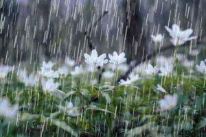 بارش باران در جادههای 8 استان کشور سایت 4s3.ir
