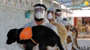 (تصاویر) گزارش رسانه خارجی از آموزش سگها برای تشخیص کرونا در ایران سایت 4s3.ir