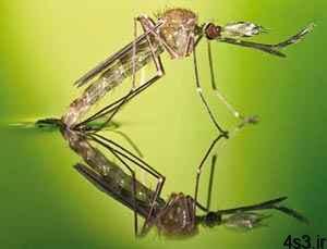 جادوی حشرات برای راه رفتن روی آب سایت 4s3.ir