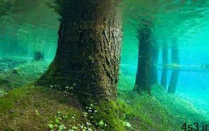 جنگلی زیر آب سایت 4s3.ir