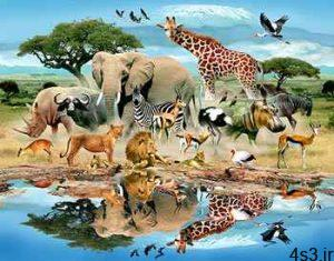 حيوانات چگونه با هم صحبت ميكنند؟ سایت 4s3.ir
