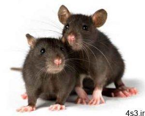 رفتار موش های نر و ماده در برابر ترس چگونه است؟ سایت 4s3.ir
