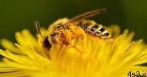 ساخت آنتی بیوتیک جدید به کمک زنبور عسل سایت 4s3.ir