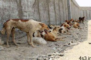سگ کشی به شیوهای وحشتناک توسط شهرداری سلماس/ تصاویر سایت 4s3.ir