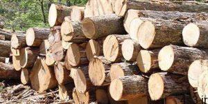 قاچاقچی چوب، مامور محیط زیست را با خودرو زیر گرفت سایت 4s3.ir