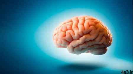 منحصر به فرد نبودن مغز انسان!