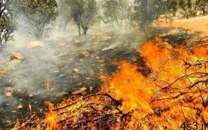 نابودی ۴۰ درصد جنگلهای خاییز در آتشسوزی سایت 4s3.ir