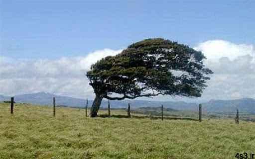 هشدار هواشناسی نسبت به کاهش دما و وزش باد شدید سایت 4s3.ir