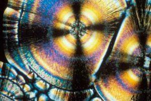 ویتامین ها زیر میکروسکوپ چه شکلی هستند؟ سایت 4s3.ir