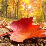 چرا برگ درختان به طور همزمان تغییر رنگ می دهند و می ریزند؟ سایت 4s3.ir