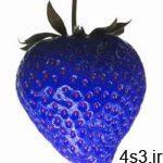 چرا هيچ غذايی به رنگ آبی نيست؟ سایت 4s3.ir