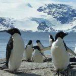 چرا پنگوئنها نمیتوانند پرواز کنند؟ سایت 4s3.ir