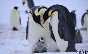 چرا پنگوئن در محیطهای خیلی سرد یخ نمی زند؟ سایت 4s3.ir