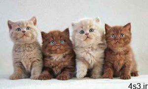 گربه ها چگونه اهلی شدند؟ سایت 4s3.ir